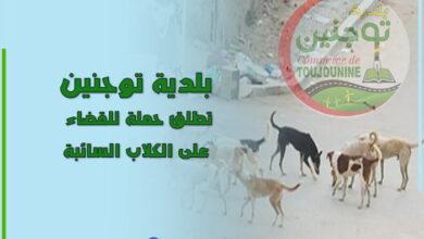 Photo of بلدية توجنين تطلق حملة للقضاء على الكلاب السائبة